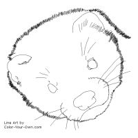 Free Printable Ferret Headstudy Coloring Page