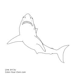 Free Printable Great White Shark Coloring Page