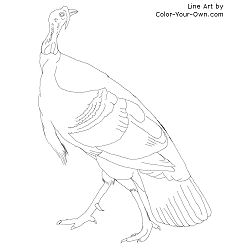 Thanksgiving - Wild Turkey coloring page