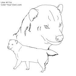 Bush Dog Coloring Page