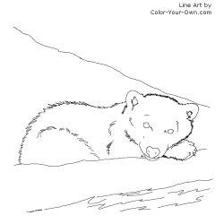 Arctic Polar Bear Cub Coloring Page