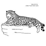 Jaguar Laying Down Line Art