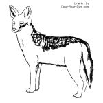 Black-backed Jackal Line Art