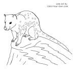 Tiger Quoll Line Art