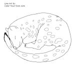Sleeping Quoll Line Art