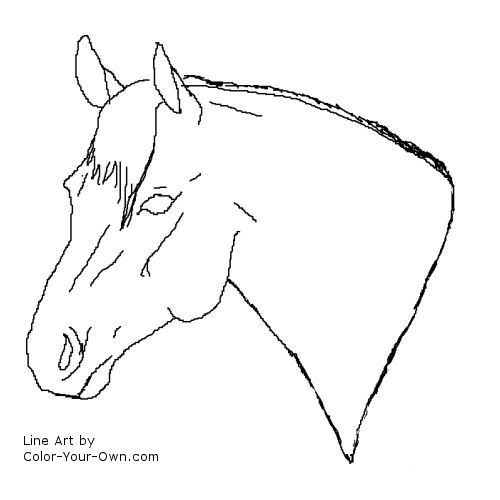 Quarter horse stallion headstudy coloring page for Quarter horse coloring pages