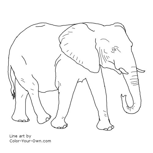 Walking African Elephant Coloring Page