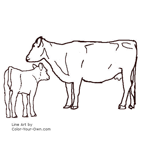 Angus cow and calf line art