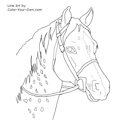 Appaloosa Cross Riding Pony Headstudy Line Art