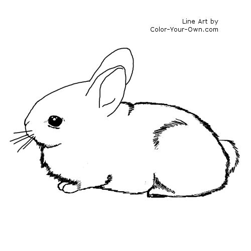 cottontail rabbit baby bunny line art
