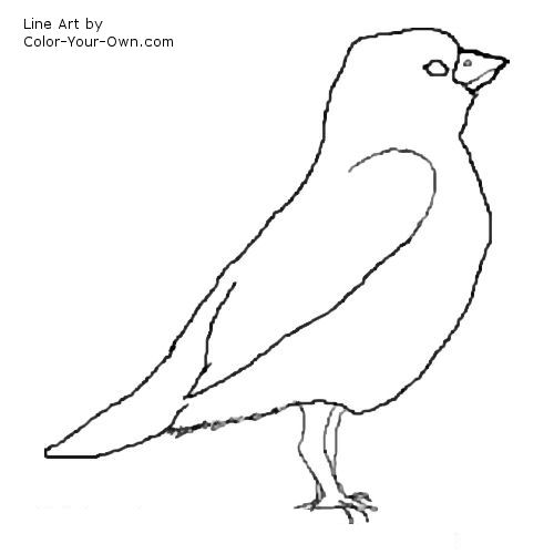 sparrow line drawing