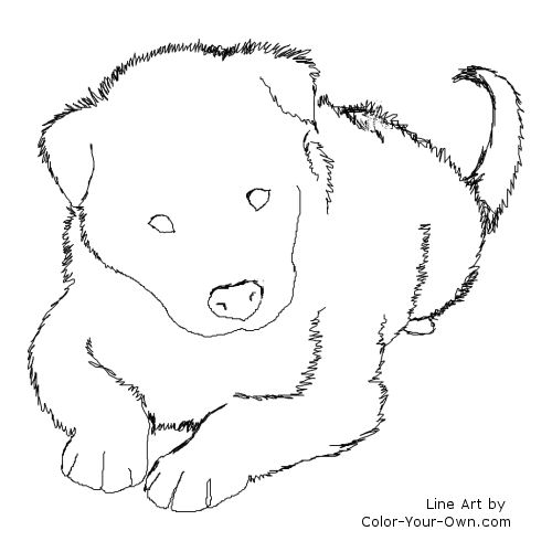 Border Collie Puppy Line Art