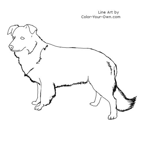 Border Collie Standing Line Art