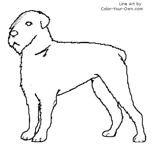 Bouvier des Flandes dog with docked tail line art