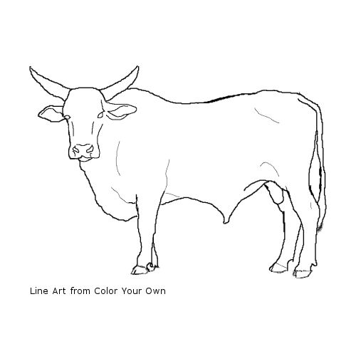 bucking bull coloring pages bucking bulls free coloring pages