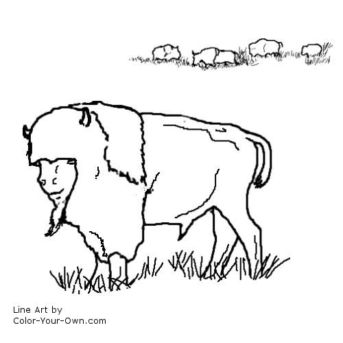 Buffalo Skull Coloring Pages