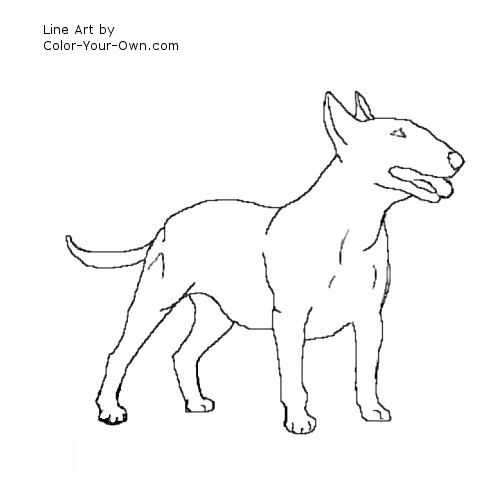 how to draw a realistic scottish terrier