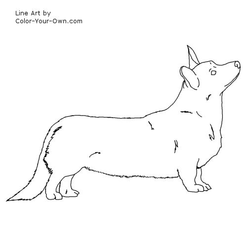 Line Art By Color Your Own : Cardigan welsh corgi coloring page