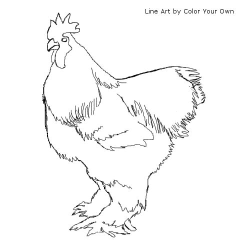 Cochin Chicken Rooster Coloring