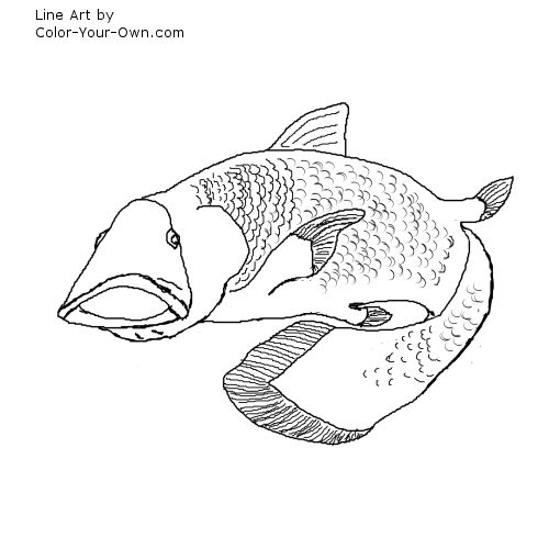 Line Art By Color Your Own : Coelacanth coloring page