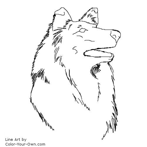 Collie Headstudy Coloring Page