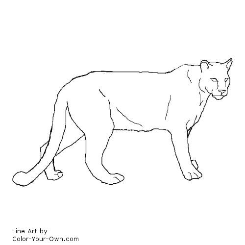 coloring pages mountain lion - photo #9