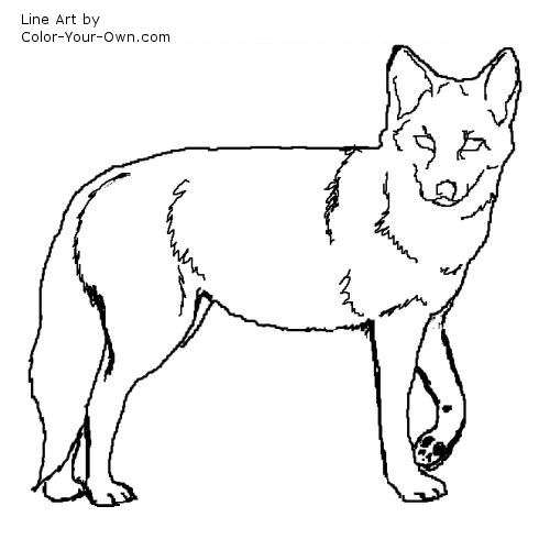coyote pictures coloring pages - photo#17