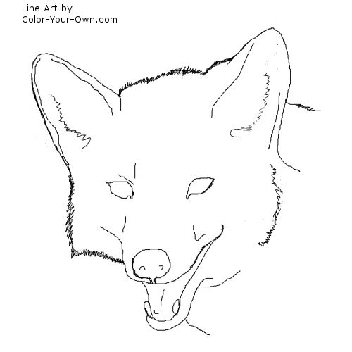 Coyote Headstudy line art