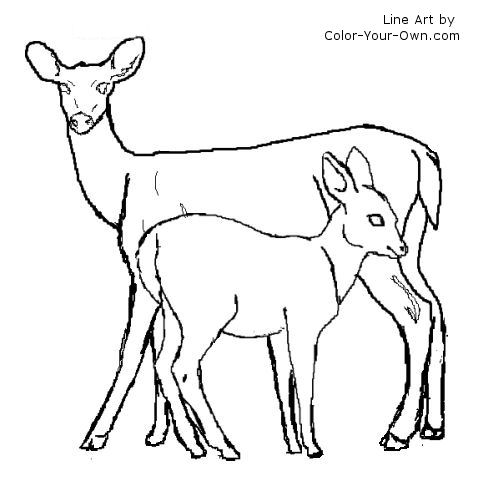 Whitetail deer doe and fawn line art