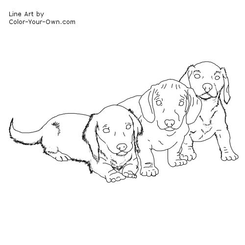 Line Drawing Dachshund : Dachshund puppy coloring page