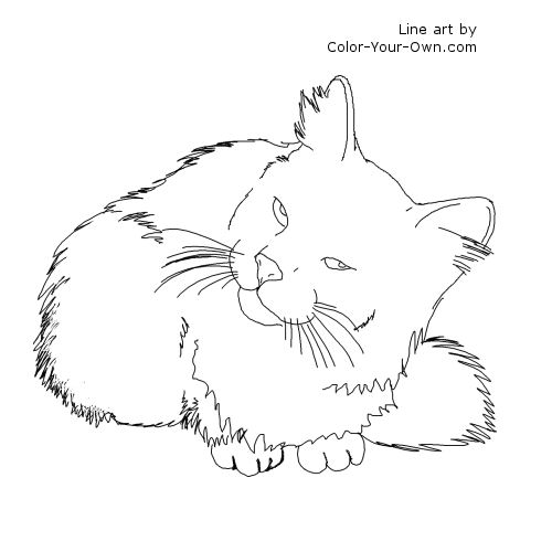 Longhaired Domestic Cat Line Art