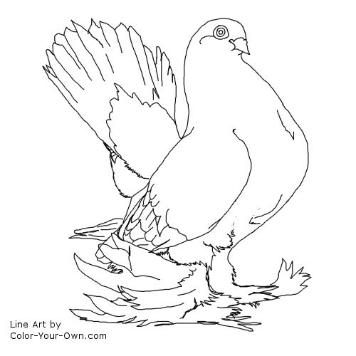 Bird Pigeon Coloring Page Fancy