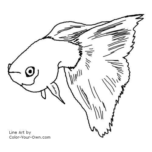 Fancy Guppy Coloring Page Guppies Coloring Page