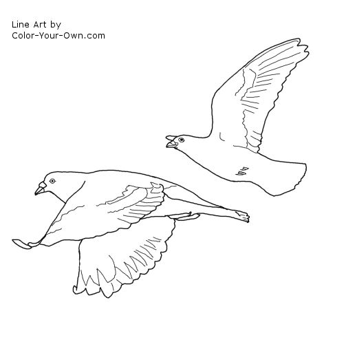 Line Art By Color Your Own : Flying pigeon bird coloring page