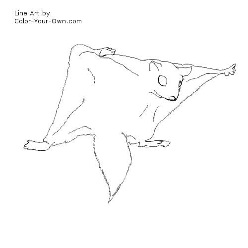 Wildlife - Flying Squirrel Coloring Page