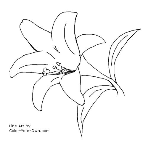Line Art Lily : Easter lily spring flower coloring page