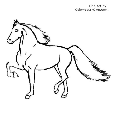 Morgan horse - gaited type Line art