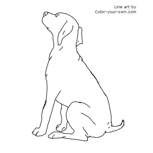 German Shorthair Pointer Puppy Line Art