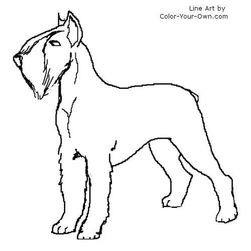 Line Art By Color Your Own : Giant schnauzer terrier coloring page