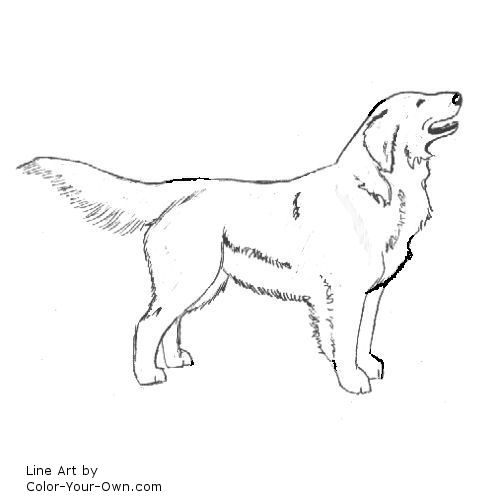Line Drawing Golden Retriever : Golden retriever coloring page