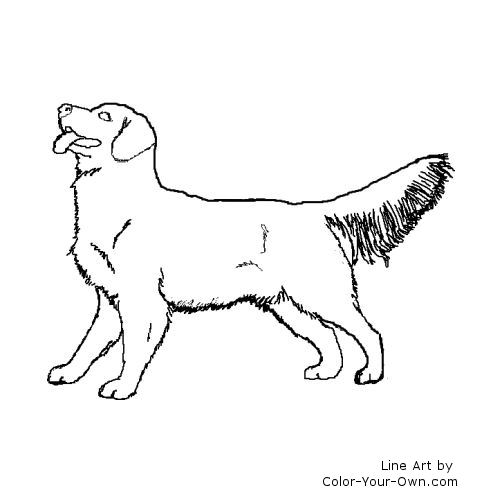 Line Drawing Golden Retriever : Golden free colouring pages