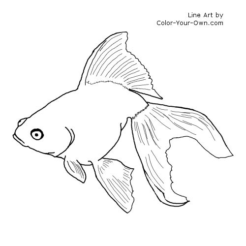 Line Art By Color Your Own : The gallery for gt goldfish drawing art