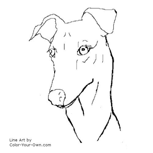 greyhound headstudy coloring page