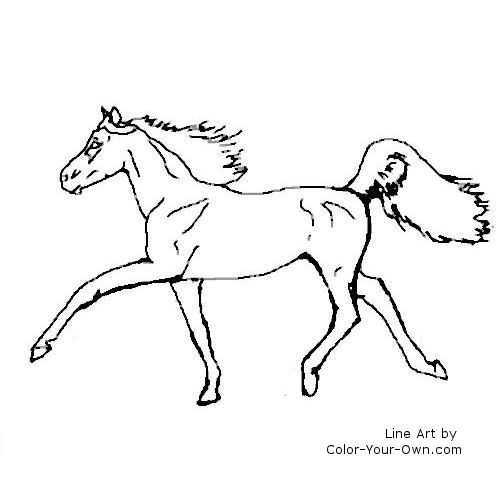 Line Art By Color Your Own : Half arab horse coloring page