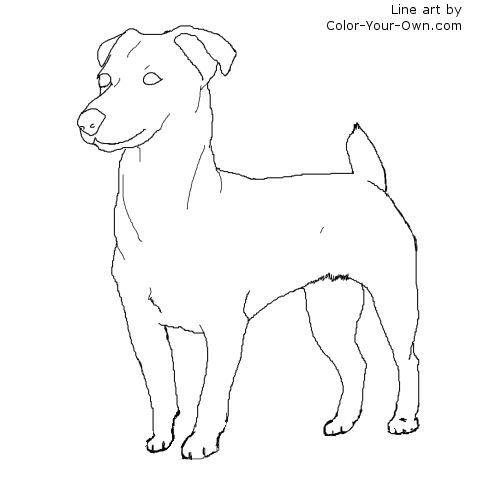 coloring pages of rat terriers - photo#43