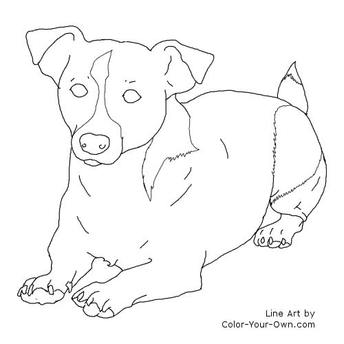 Jack Russel Terrier Dog Laying Down Coloring Page