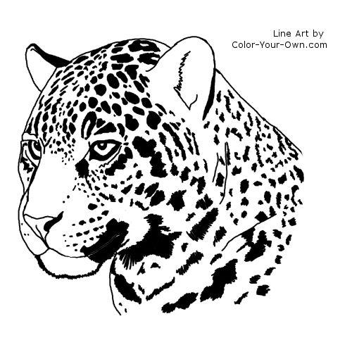 Line Drawing Jaguar : Jaguar headstudy coloring page