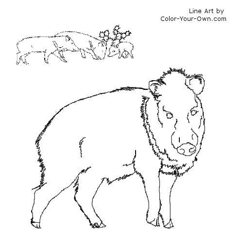 back to the index - Prickly Pear Cactus Coloring Page
