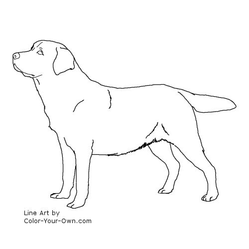 Line Drawing Golden Retriever : Labrador puppies coloring pages