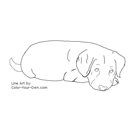Dog Labrador Retriever Puppy Coloring Page